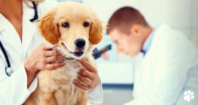 pet pathology