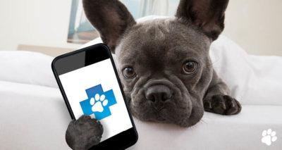 mobile vet service